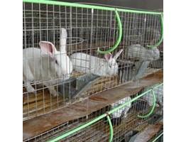 Потребности кроликов, норок и других животных в воде