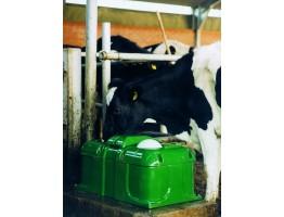 Потребности скота мясных пород в воде