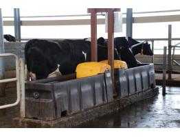 Потребности скота молочных пород в воде