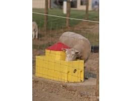 Потребности овец в воде