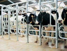 Строительство молочно-товарной фермы часть 1