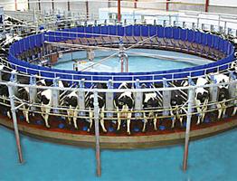 Строительство молочной фермы часть 2