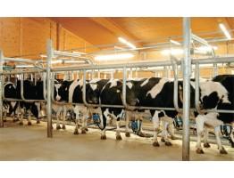 Окупаемость молочных роботов