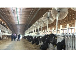 Меры по предупреждению теплового стресса у скота
