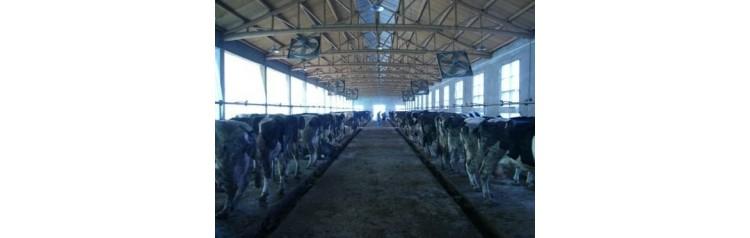 Линейная доильная установка с молокопроводом, от 6 одновременно доящиихся коров цена за шт